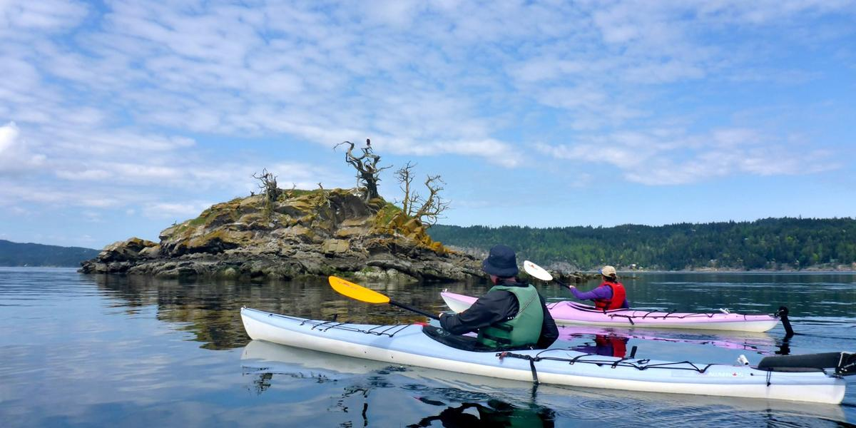 Kayakers paddle past eagle on Ballingall Islets